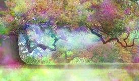 Czarodziejki Dębowy drzewo Obraz Stock