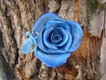 Czarodziejki i błękita róża zdjęcia royalty free