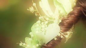 Czarodziejki las zdjęcie wideo