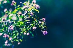 Czarodziejscy biali mali kwiaty na kolorowym marzycielskim magicznym żółtym czerwonym rozmytym tle Fotografia Royalty Free