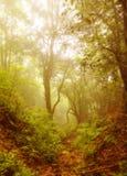 Czarodziejska postać w vernal lesie Zdjęcia Royalty Free