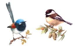 Czarodziejska strzyżyka i Chickadee ptaków akwareli ilustraci Ustalona ręka Rysująca ilustracji