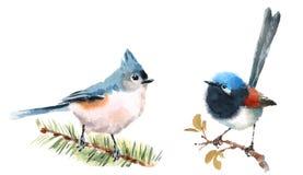Czarodziejska strzyżyka i Titmouse ptaków akwareli ilustraci Ustalona ręka Rysująca ilustracja wektor
