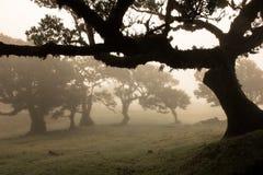 Czarodziejski drzewo Obrazy Stock