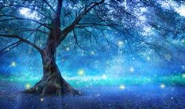 Czarodziejski drzewo Zdjęcie Stock