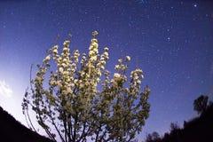 Czarodziejski gwiaździsty krajobraz Obraz Stock