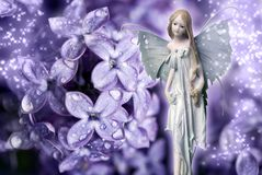 czarodziejski kwiat Zdjęcia Royalty Free