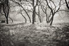 czarodziejski las obraz stock
