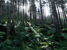 Czarodziejski las Zdjęcie Stock