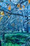 Czarodziejski las Zdjęcie Royalty Free