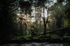 Czarodziejski las tropikalny Obraz Royalty Free