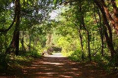 Czarodziejski las, tunel Zdjęcia Stock