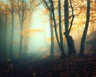 Czarodziejski las w mgle Spadków drewna Zaczarowany jesień las w mgle zdjęcie royalty free
