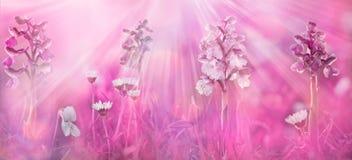 Czarodziejski ogon wiosny tło pięknie się tło charakteru wektora banner tła kwiaty form różowego spiralę trochę zdjęcie royalty free