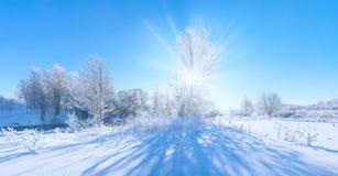 Czarodziejski zimy drzewo Zdjęcia Stock