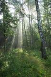 czarodziejskiego lasu bajka Obrazy Royalty Free