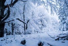 czarodziejskiego lasu opowieści zimy śniegu Zdjęcie Royalty Free