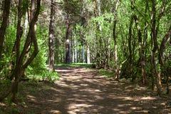 Czarodziejskiego lasu tło Fotografia Stock