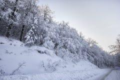 czarodziejskiego lasu zima Zdjęcia Royalty Free