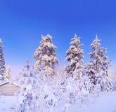 czarodziejskiego lasu zima Fotografia Royalty Free