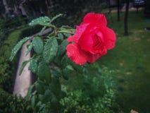 Czarowni piękni kwiaty Fotografia Royalty Free