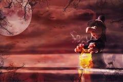 Czarownica robi magii na Halloween Zdjęcie Stock
