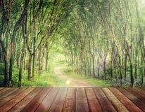 Czarowny Lasowy pas ruchu w Gumowego drzewa plantaci pojęciu fotografia stock