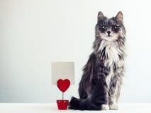 Czarujący, owłosiony kot Obrazy Royalty Free