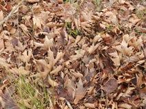 Czas brązów liście zdjęcie stock