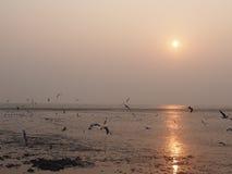 Czas iść do domu, moment morze, słońce i ptaki, Obraz Royalty Free