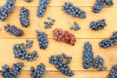 Czas kolekcja owocowy żniwo Fotografia Stock