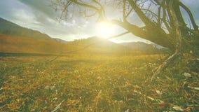 Czasu upływ śmiertelny drzewo i sucha żółta trawa przy mountian krajobrazem z chmurami i słońce promieniami Horyzontalny suwaka r zdjęcie wideo
