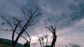 Czasu upływ śmiertelny drzewo i sucha żółta trawa przy mountian krajobrazem z chmurami i słońce promieniami Horyzontalny suwaka r zbiory