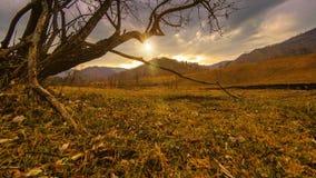 Czasu upływ śmiertelny drzewo i sucha żółta trawa przy mountian krajobrazem z chmurami i słońce promieniami Horyzontalny suwaka r zbiory wideo