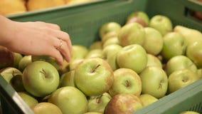 Czasu upływ kobiety ` s ręki wybiera zielonych jabłka zbiory