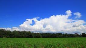 Czasu upływ kultywujący pole w wiośnie, Francja zbiory