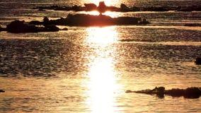 Czasu upływ, Lodowy floe unosi się w wodzie, czerepy lód na rzece w wiośnie, lodu dryf zbiory wideo