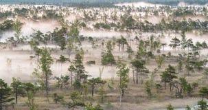 Czasu upływ mgły wydźwignięcie od bagna lasu zbiory wideo