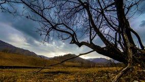 Czasu upływ nieżywy drzewo i sucha żółta trawa przy mountian krajobrazem z chmurami i słońce promieniami Horyzontalny suwaka ruch zbiory wideo