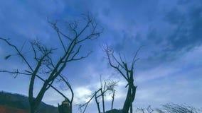 Czasu upływ nieżywy drzewo i sucha żółta trawa przy mountian krajobrazem z chmurami i słońce promieniami Horyzontalny suwaka ruch zdjęcie wideo
