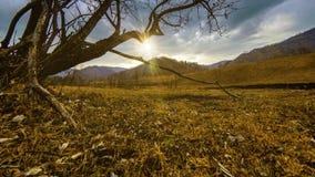 Czasu upływ nieżywy drzewo i sucha żółta trawa przy mountian krajobrazem z chmurami i słońce promieniami Horyzontalny suwaka ruch zbiory