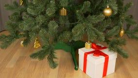 Czasu upływ Pojawiać się prezentów pudełka pod choinką Czerwony biały koloru prezenta pudełko Zielona choinka żyje w domu zdjęcie wideo