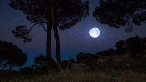 Czasu upływ tropi strzał zmierzch z rozjarzonym księżyc w pełni zbiory wideo