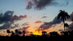 Czasu upływ z sylwetkami drzewka palmowe zbiory