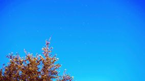 Czasu upływu gwiazdy ślada na nocnym niebie zbiory wideo
