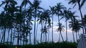 Czasu upływu wschód słońca Widok świt słońce nad morzem przez drzewek palmowych na plaży, Bali, Indonezja zbiory