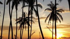 Czasu upływu wschód słońca Widok świt słońce nad morzem przez drzewek palmowych na plaży, Bali, Indonezja zdjęcie wideo