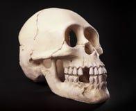 czaszka Fotografia Royalty Free