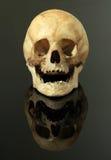 czaszka Zdjęcia Stock