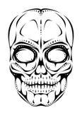 czaszka Zdjęcie Stock